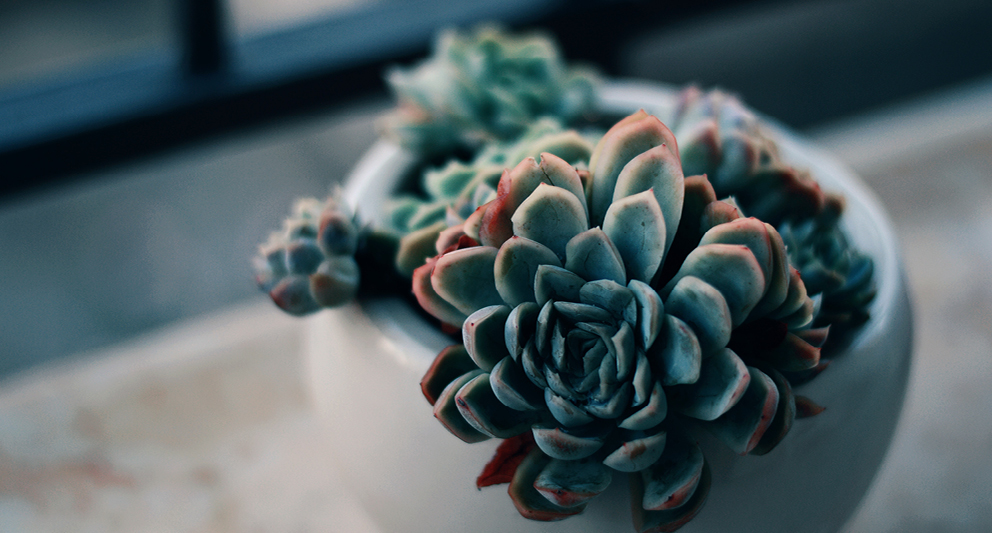 Indoor Succulents: An easy way to decorate your house