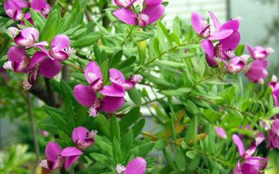 September Bells  – Super Purple for Spring!